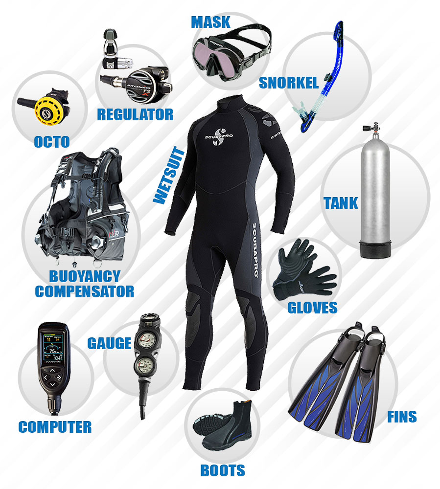 7 Types of Freediving Equipment
